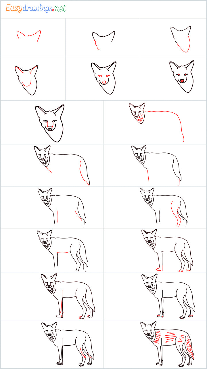 Coyote Drawing Overview