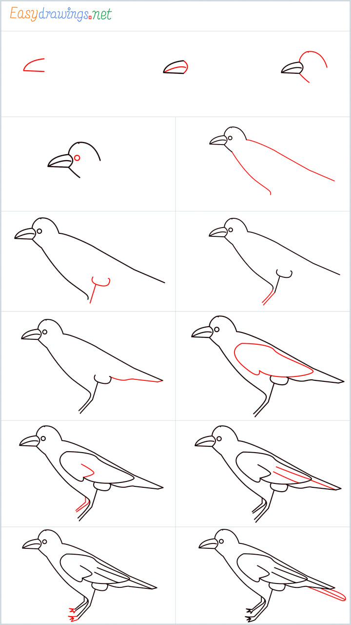 Crow Drawing Overview