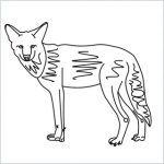 Draw a Coyote