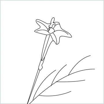 Draw a Cypress vine flower