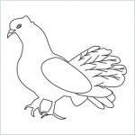Draw a Dove