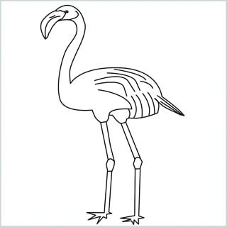 Draw a Flamingo