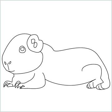 Draw a Guinea pig