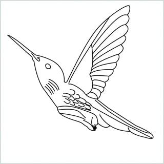Draw a Hummingbird