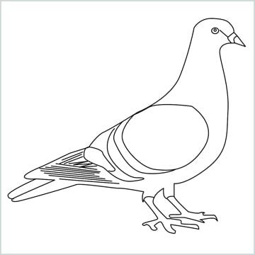 Draw a Pigeon