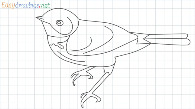 Eastern bluebird grid line drawing