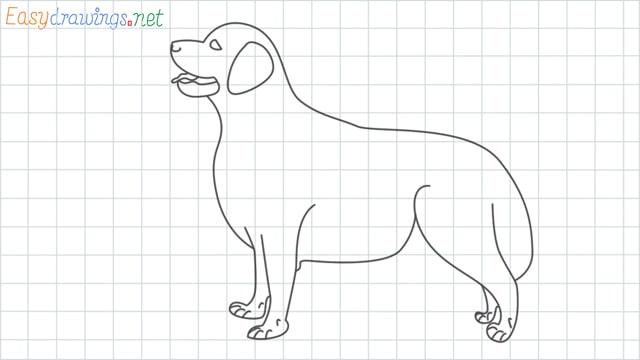 Golden Retriever grid line drawing