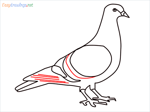 How To Draw A Easy Pigeon Step (10)