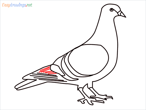 How To Draw A Easy Pigeon Step (11)