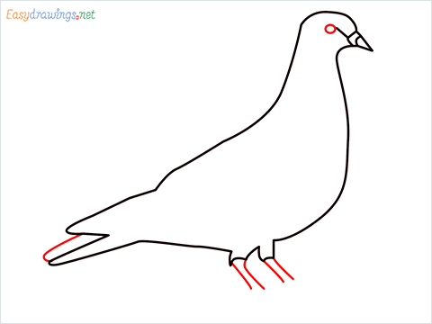 How To Draw A Easy Pigeon Step (5)
