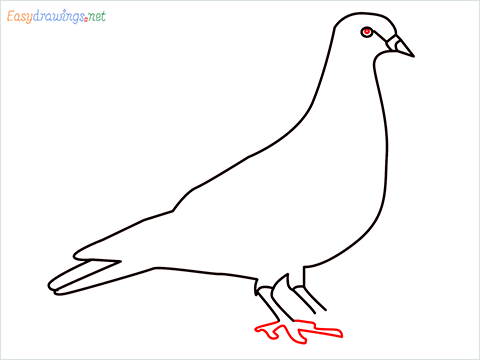 How To Draw A Easy Pigeon Step (6)