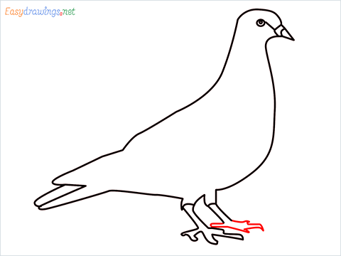 How To Draw A Easy Pigeon Step (7)