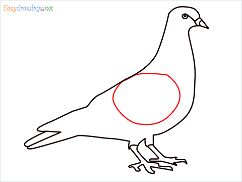 How To Draw A Easy Pigeon Step (8)