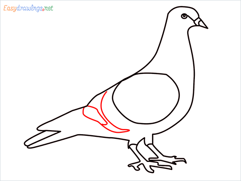 How To Draw A Easy Pigeon Step (9)