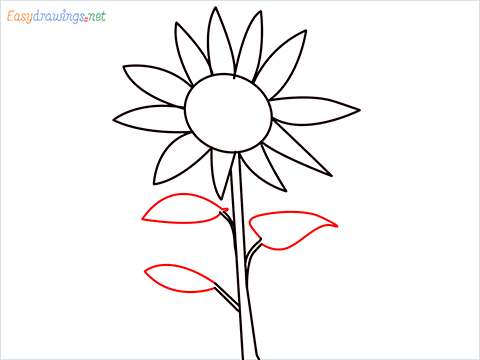 How To Draw A Easy Sunflower Step (5)