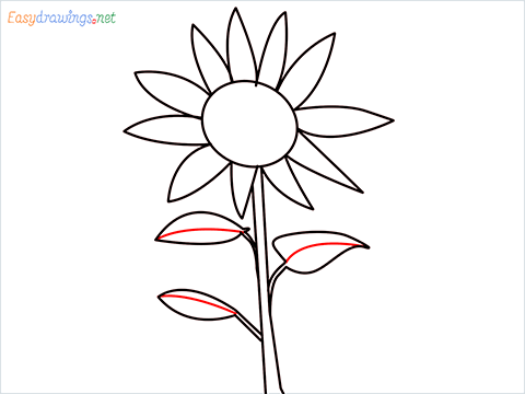How To Draw A Easy Sunflower Step (6)