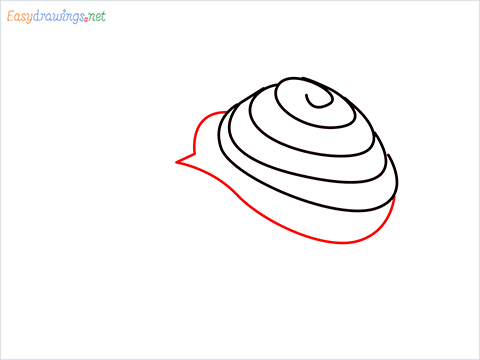 How To Draw Snail Step (5)