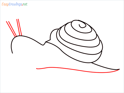 How To Draw Snail Step (7)