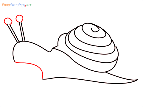 How To Draw Snail Step (8)