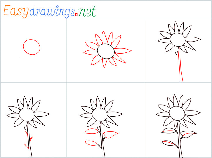 Overview Sunflower Drawing