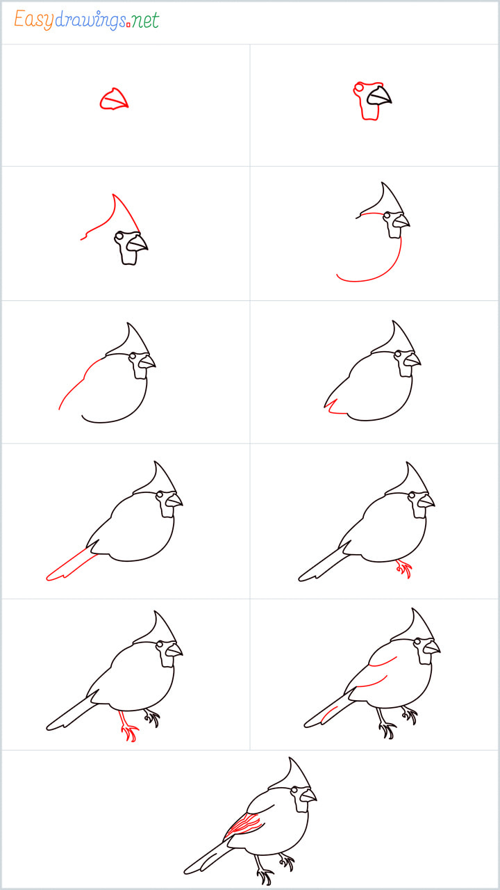 Overview added for Cardinal bird drawing