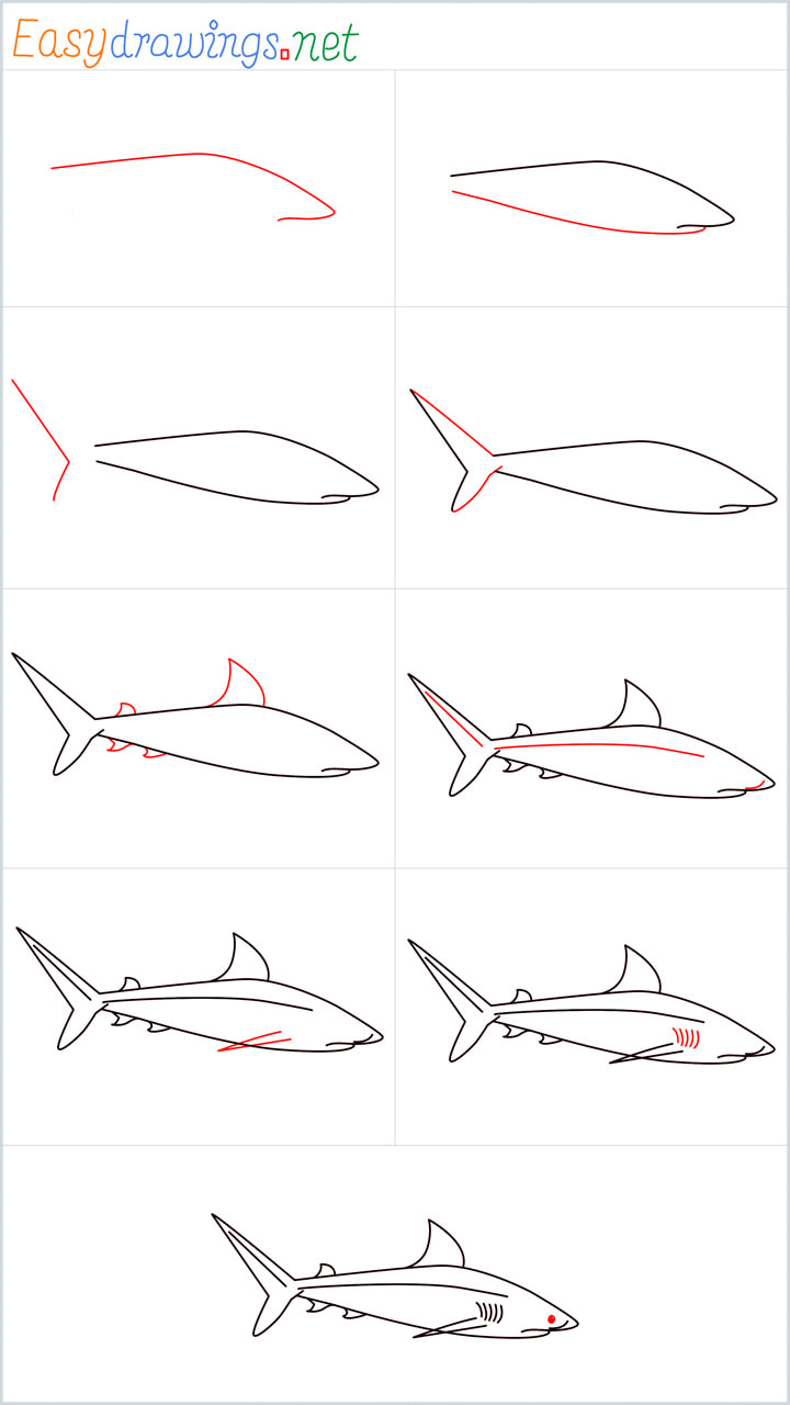 Overview for Baby great white shark drawing all steps