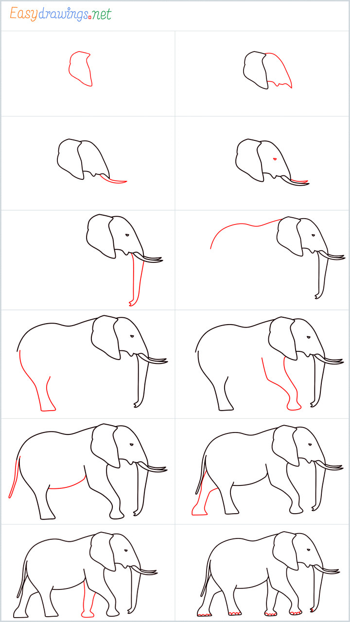 Overview for Elephant drawing all steps in one place