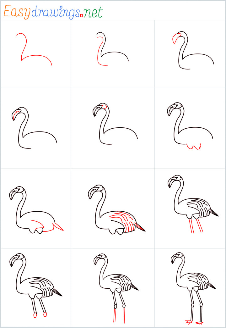 Overview for Flamingo drawing all steps in one place
