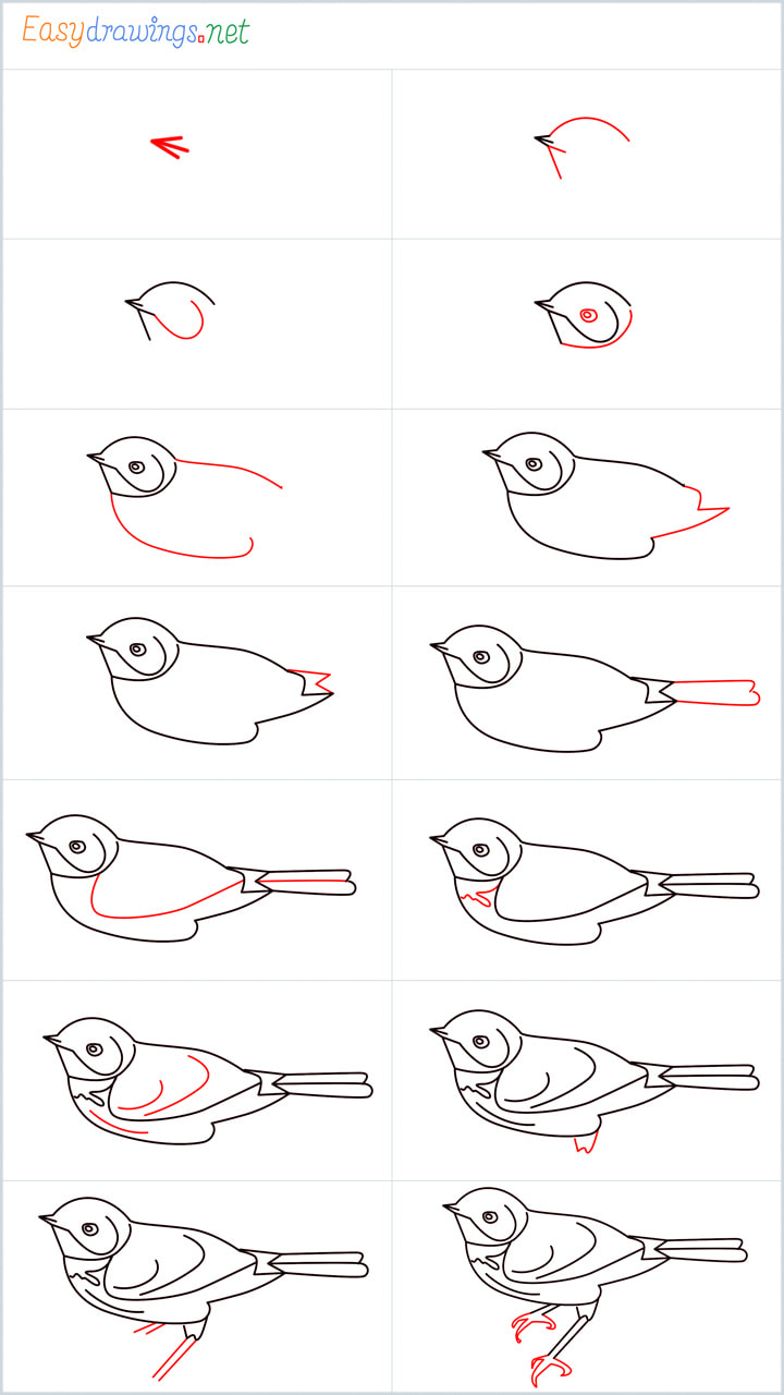 all outline for Eastern bluebird drawing example