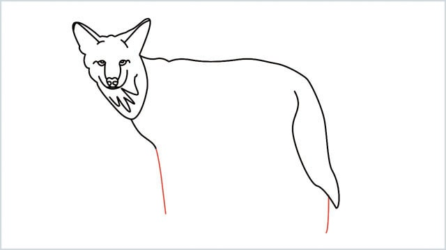 how to draw a coyote step (10)
