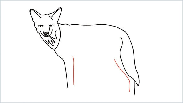 how to draw a coyote step (11)