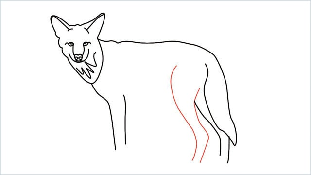 how to draw a coyote step (12)