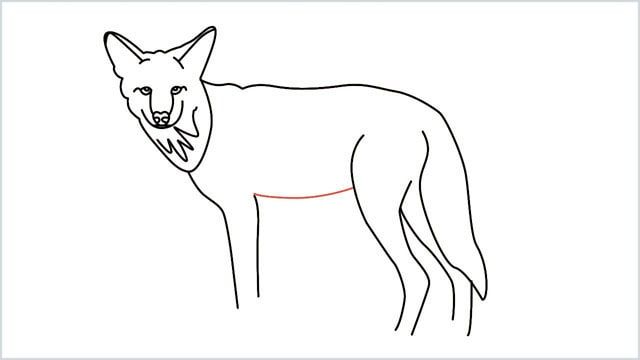 how to draw a coyote step (13)