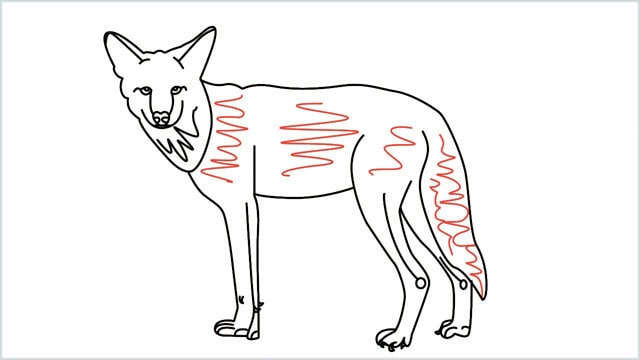 how to draw a coyote step (18)