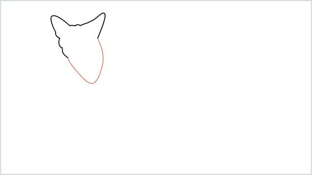 how to draw a coyote step (3)