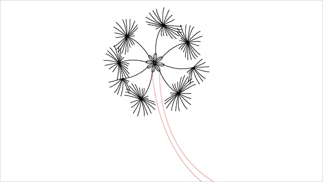 how to draw a dandelion step (9)