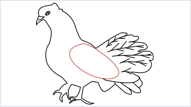 how to draw a dove step (14)