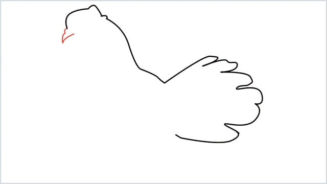 how to draw a dove step (4)
