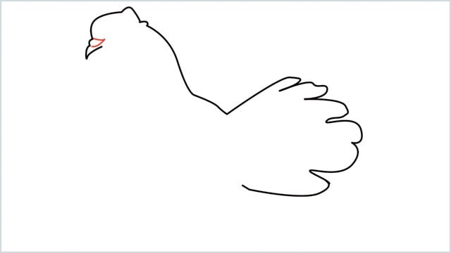 how to draw a dove step (5)