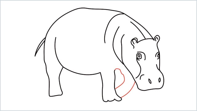 how to draw a hippo step (11)