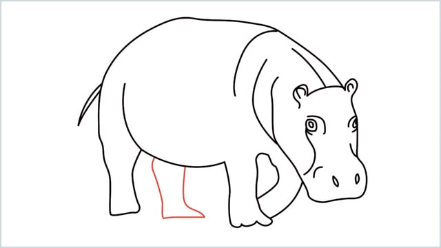 How to draw a Hippo step by step for beginners - Easy drawings