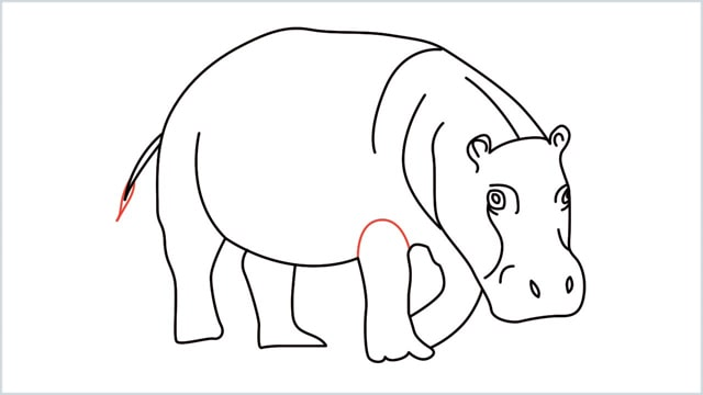 how to draw a hippo step (13)