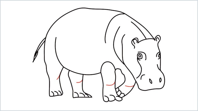 how to draw a hippo step (15)
