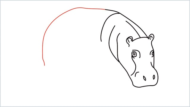 how to draw a hippo step (7)