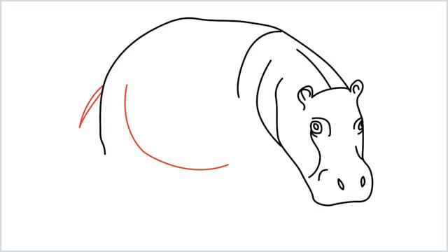 how to draw a hippo step (8)