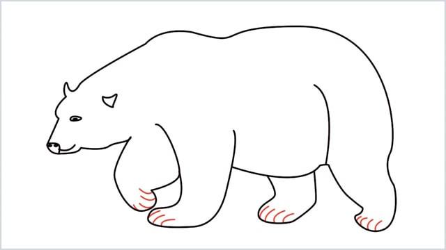 how to draw a polar bear step (11)