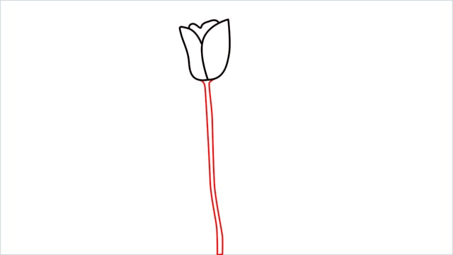 how to draw a tulip flower step (5)