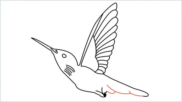 how to draw hummingbird step (10)