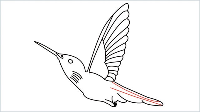 how to draw hummingbird step (11)