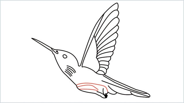 how to draw hummingbird step (12)
